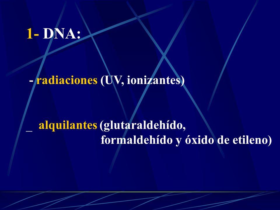 1- DNA: - radiaciones (UV, ionizantes) _ alquilantes (glutaraldehído, formaldehído y óxido de etileno)