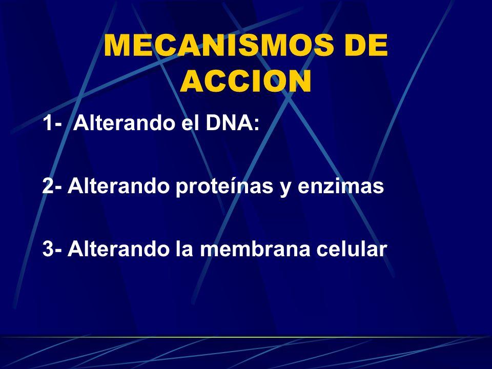 MECANISMOS DE ACCION 1- Alterando el DNA: 2- Alterando proteínas y enzimas 3- Alterando la membrana celular