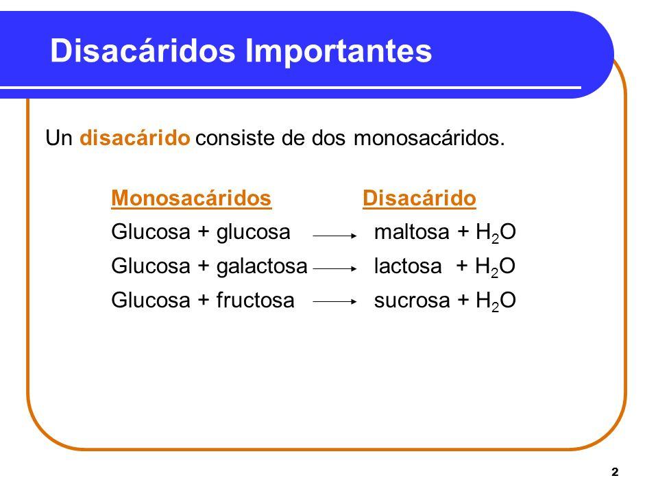 2 Disacáridos Importantes Un disacárido consiste de dos monosacáridos. Monosacáridos Disacárido Glucosa + glucosa maltosa + H 2 O Glucosa + galactosal