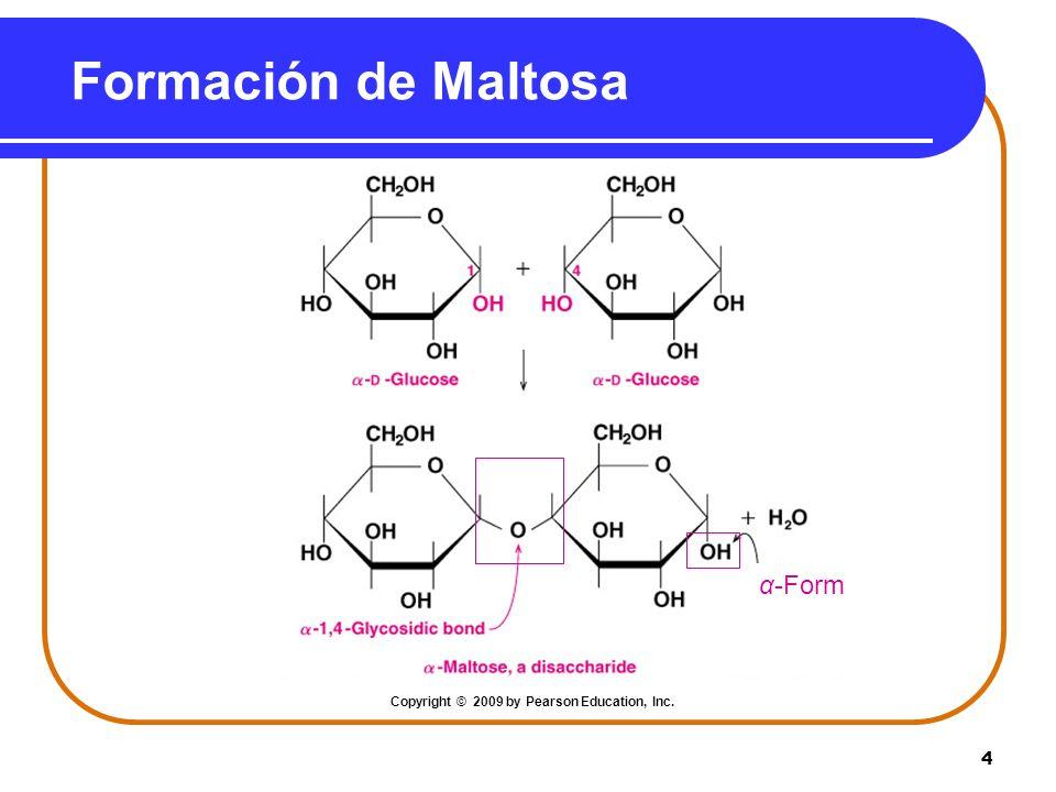 4 Formación de Maltosa α-Form Copyright © 2009 by Pearson Education, Inc.