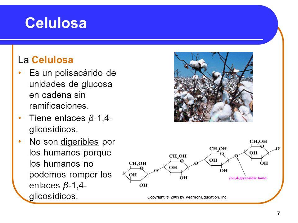 7 Celulosa La Celulosa Es un polisacárido de unidades de glucosa en cadena sin ramificaciones. Tiene enlaces β-1,4- glicosídicos. No son digeribles po