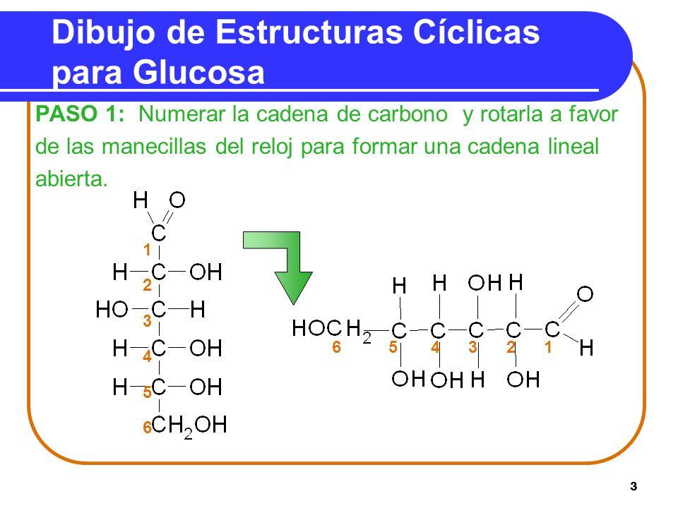 3 Dibujo de Estructuras Cíclicas para Glucosa PASO 1: Numerar la cadena de carbono y rotarla a favor de las manecillas del reloj para formar una caden