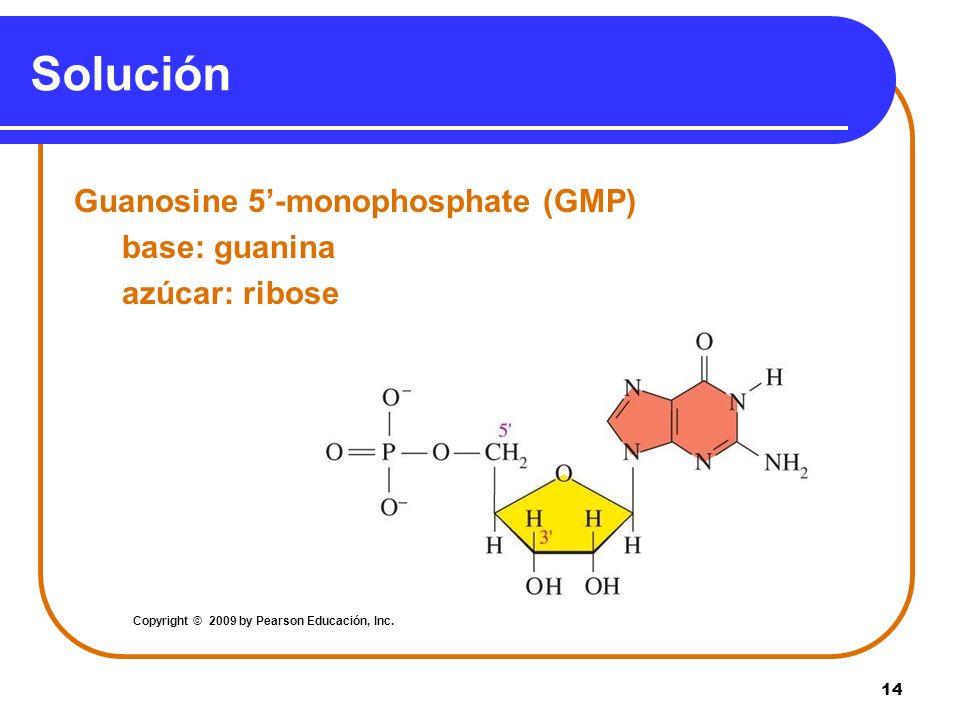 14 Solución Guanosine 5-monophosphate (GMP) base: guanina azúcar: ribose Copyright © 2009 by Pearson Educación, Inc.