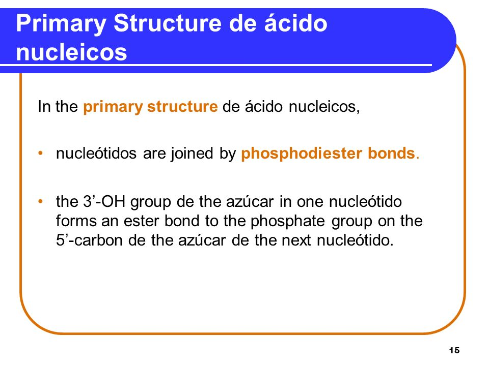 15 Primary Structure de ácido nucleicos In the primary structure de ácido nucleicos, nucleótidos are joined by phosphodiester bonds. the 3-OH group de