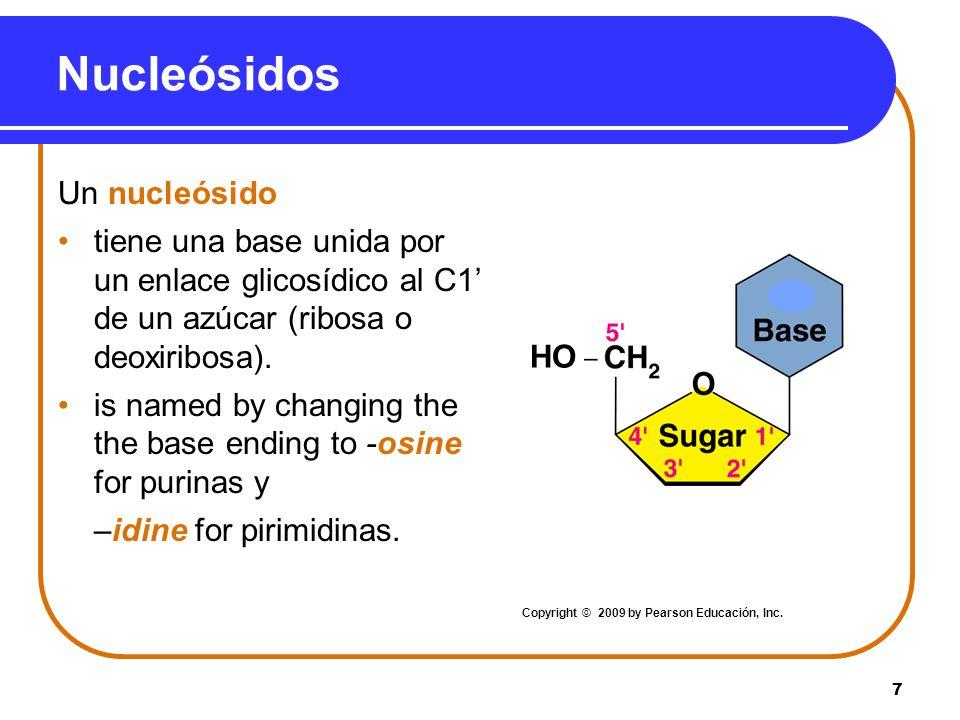 7 HO Un nucleósido tiene una base unida por un enlace glicosídico al C1 de un azúcar (ribosa o deoxiribosa). is named by changing the the base ending