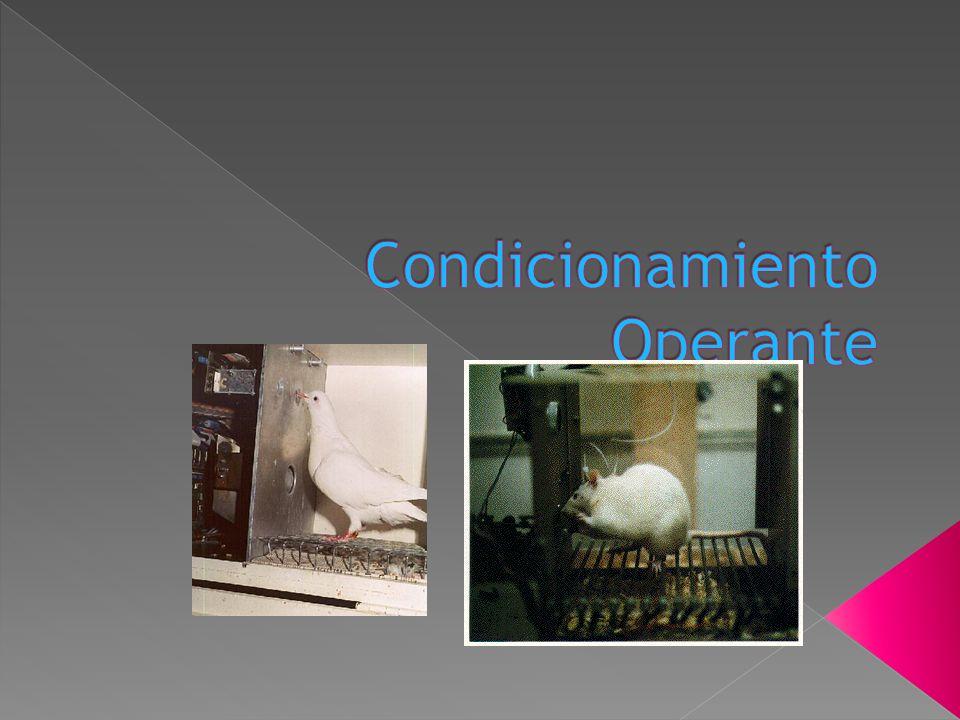 Skinner formula el concepto de condicionamiento operante el cual implica que la probabilidad de que una conducta aumente o disminuya depende de lo que