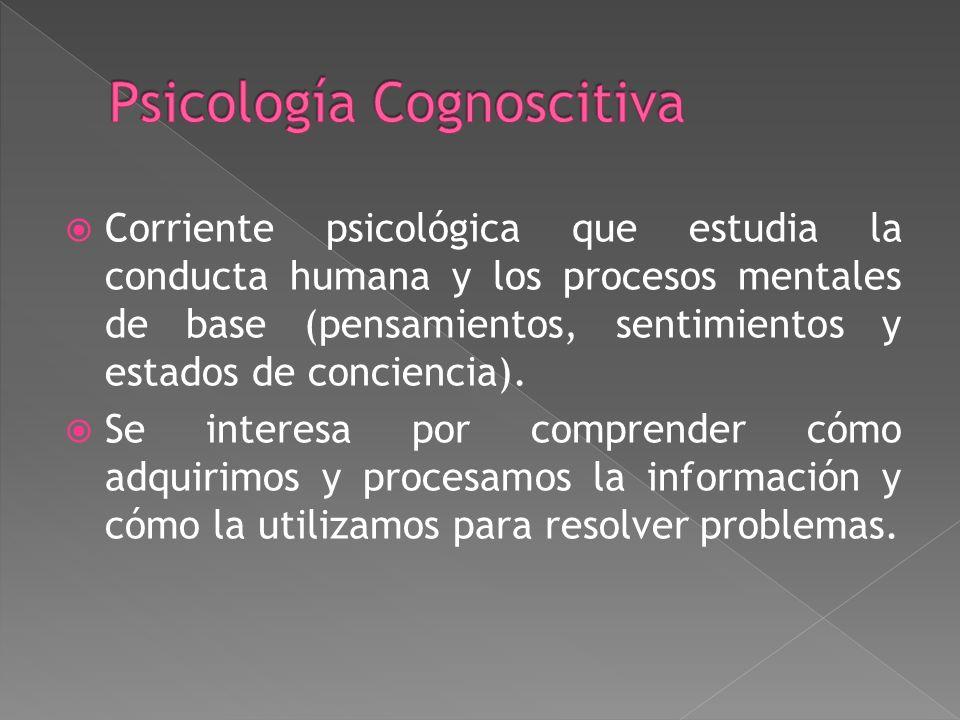 Los psicólogos humanistas enfatizan en el potencial humano y la importancia del amor, la pertenencia, la autoestima, la autoexpresión, la experiencia