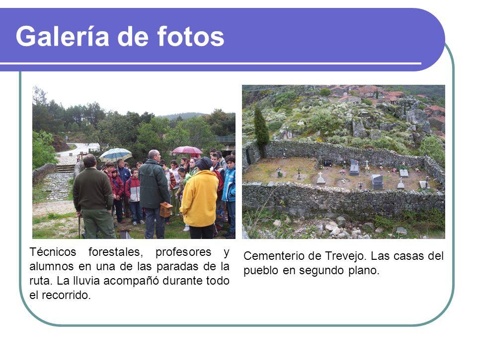 Galería de fotos Técnicos forestales, profesores y alumnos en una de las paradas de la ruta. La lluvia acompañó durante todo el recorrido. Cementerio