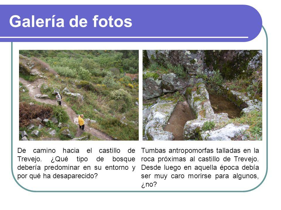 Galería de fotos De camino hacia el castillo de Trevejo. ¿Qué tipo de bosque debería predominar en su entorno y por qué ha desaparecido? Tumbas antrop
