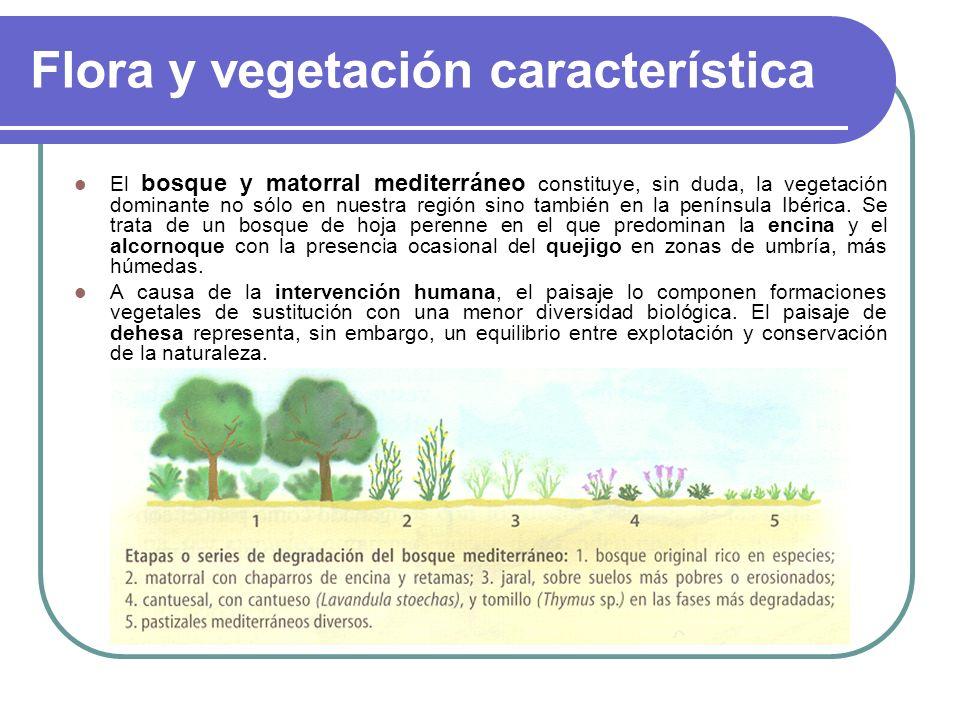 Flora y vegetación característica El bosque y matorral mediterráneo constituye, sin duda, la vegetación dominante no sólo en nuestra región sino tambi