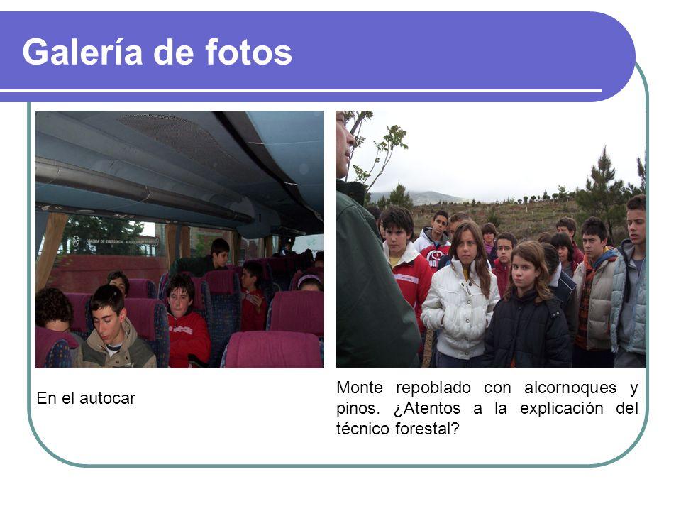 Galería de fotos En el autocar Monte repoblado con alcornoques y pinos. ¿Atentos a la explicación del técnico forestal?