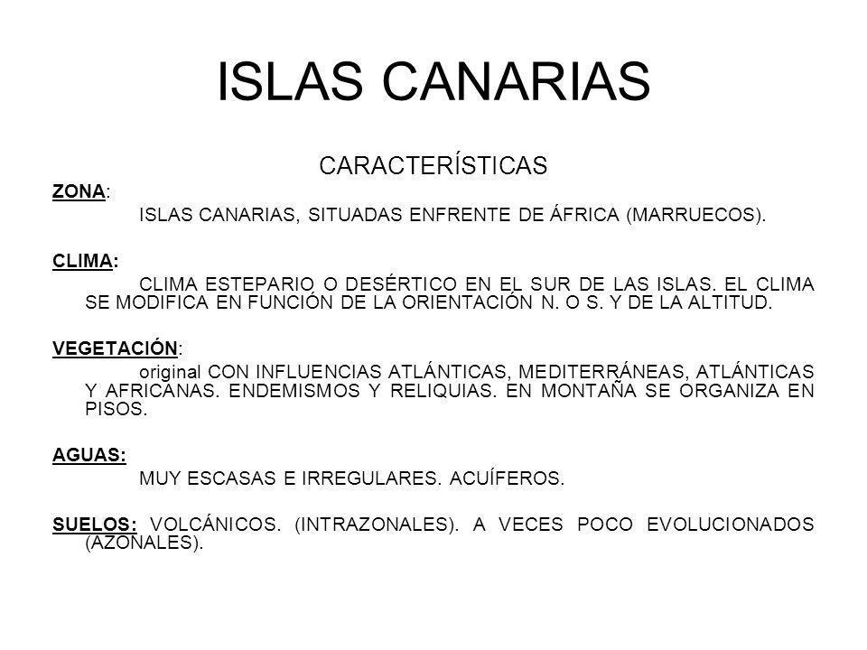 ISLAS CANARIAS CARACTERÍSTICAS ZONA: ISLAS CANARIAS, SITUADAS ENFRENTE DE ÁFRICA (MARRUECOS). CLIMA: CLIMA ESTEPARIO O DESÉRTICO EN EL SUR DE LAS ISLA
