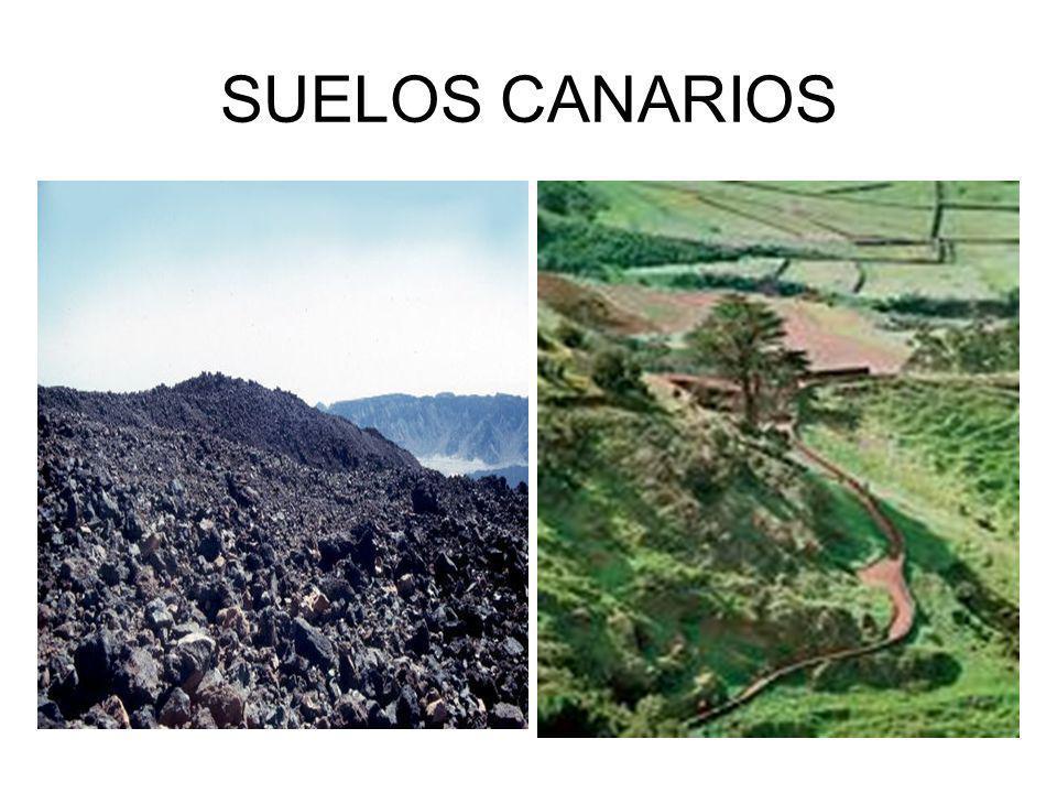 SUELOS CANARIOS