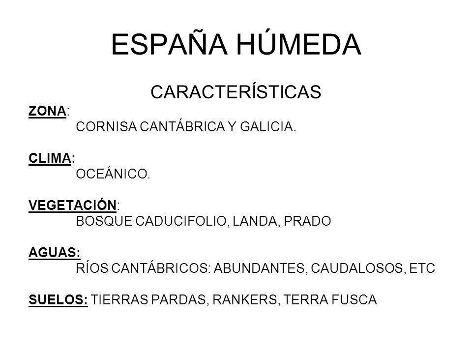 ESPAÑA HÚMEDA CARACTERÍSTICAS ZONA: CORNISA CANTÁBRICA Y GALICIA. CLIMA: OCEÁNICO. VEGETACIÓN: BOSQUE CADUCIFOLIO, LANDA, PRADO AGUAS: RÍOS CANTÁBRICO