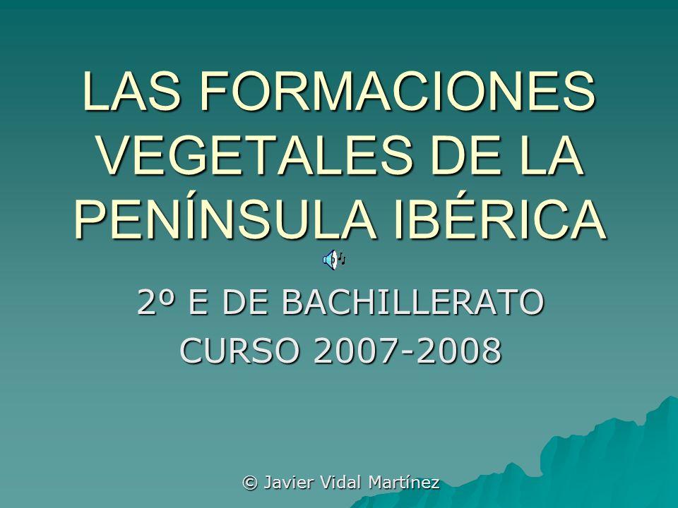 A)C ONCEPTOS X FORMACIONES VEGETALES II EL MATORRAL