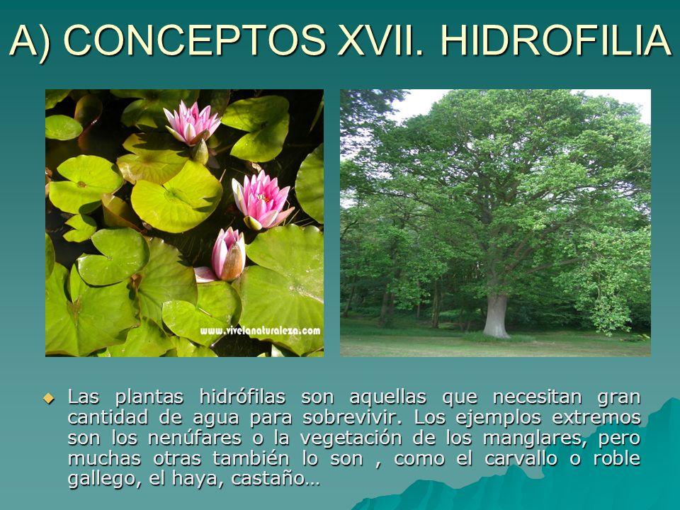 A) CONCEPTOS XVII. HIDROFILIA Las plantas hidrófilas son aquellas que necesitan gran cantidad de agua para sobrevivir. Los ejemplos extremos son los n