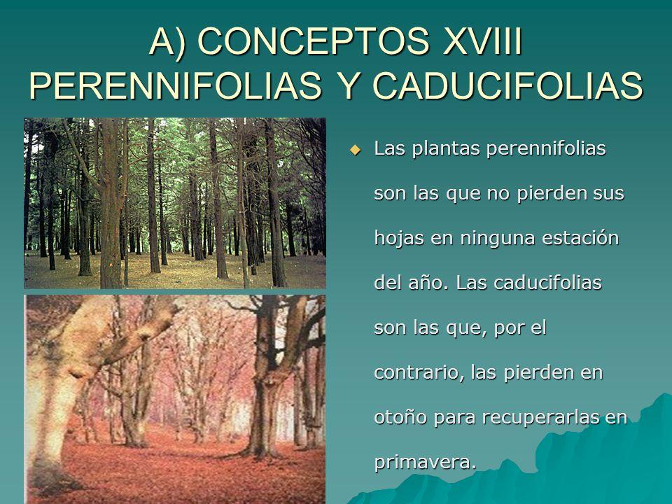 A) CONCEPTOS XVIII PERENNIFOLIAS Y CADUCIFOLIAS Las plantas perennifolias son las que no pierden sus hojas en ninguna estación del año. Las caducifoli