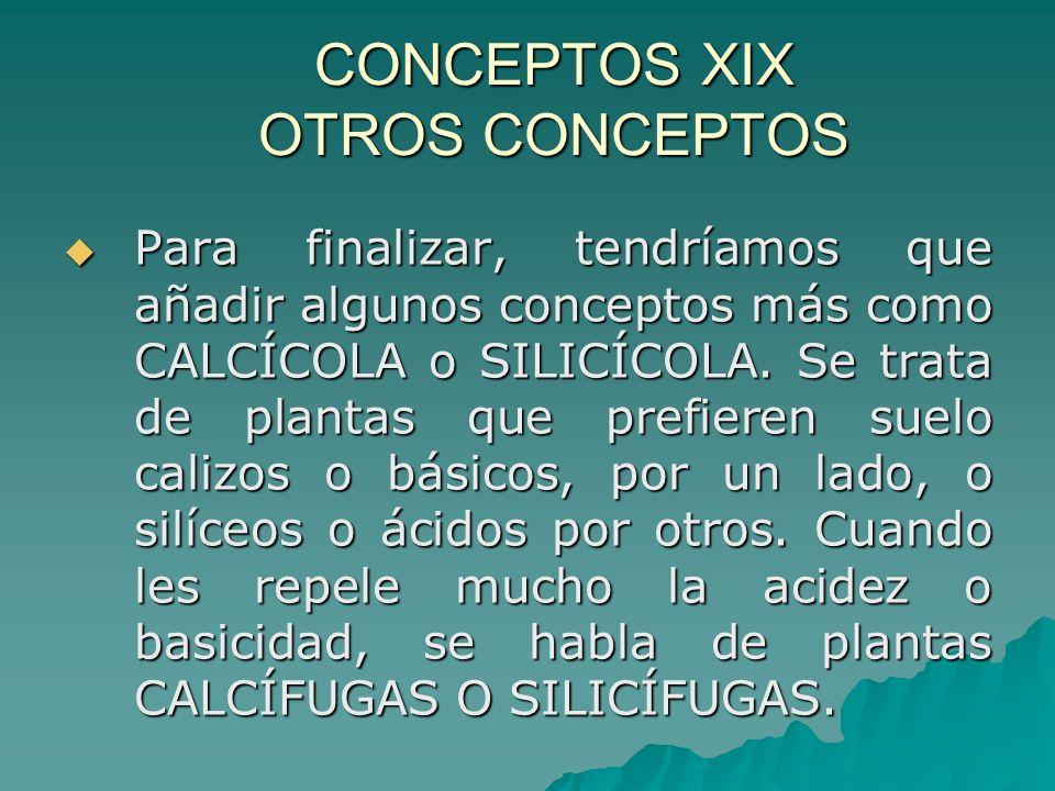 CONCEPTOS XIX OTROS CONCEPTOS Para finalizar, tendríamos que añadir algunos conceptos más como CALCÍCOLA o SILICÍCOLA. Se trata de plantas que prefier