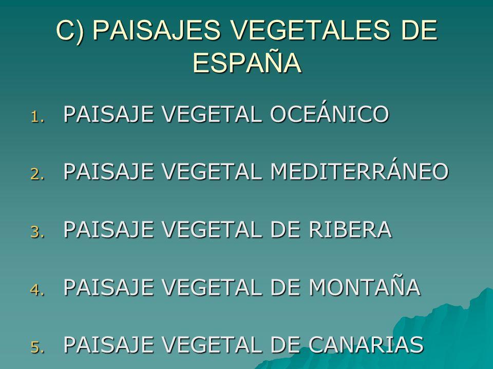 C) PAISAJES VEGETALES DE ESPAÑA 1. PAISAJE VEGETAL OCEÁNICO 2. PAISAJE VEGETAL MEDITERRÁNEO 3. PAISAJE VEGETAL DE RIBERA 4. PAISAJE VEGETAL DE MONTAÑA