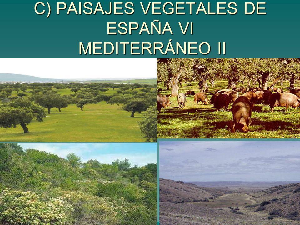 C) PAISAJES VEGETALES DE ESPAÑA VI MEDITERRÁNEO II