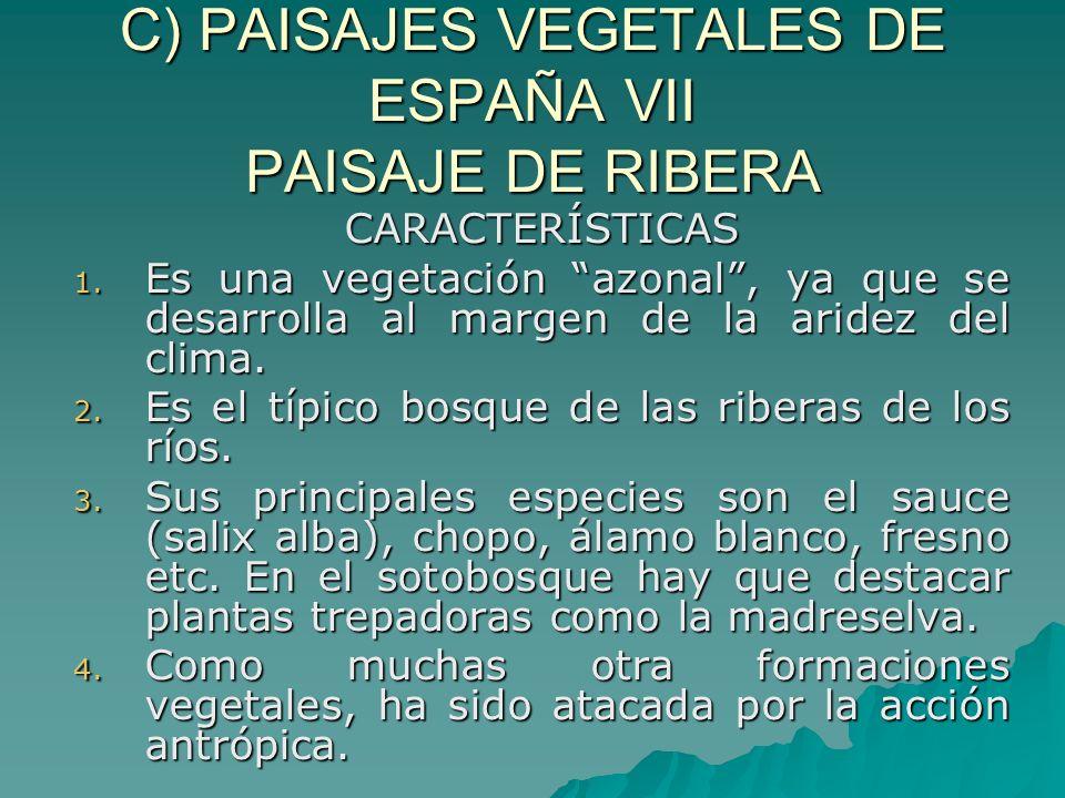 C) PAISAJES VEGETALES DE ESPAÑA VII PAISAJE DE RIBERA CARACTERÍSTICAS 1. Es una vegetación azonal, ya que se desarrolla al margen de la aridez del cli
