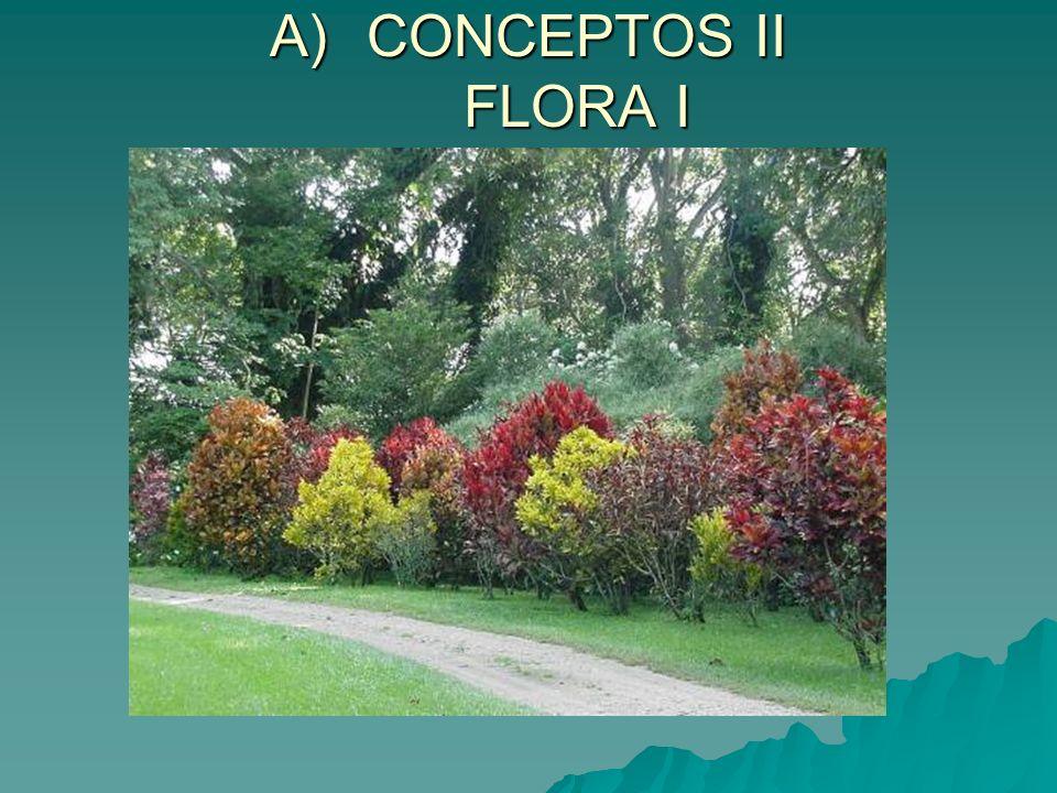 C) PAISAJES VEGETALES DE ESPAÑA V PAISAJE VEGETAL MEDITERRÁNEO CARACTERÍSTICAS 5.