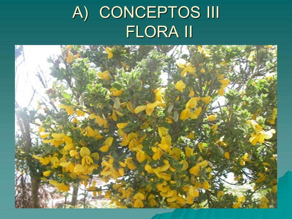 A)CONCEPTOS III FLORA II