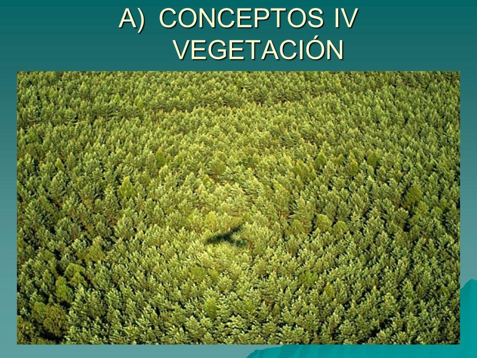 A) CONCEPTOS XV VEGETACIÓN SECUNDARIA A) CONCEPTOS XV VEGETACIÓN SECUNDARIA Vegetación Secundaria (Vegetación debida a la acción antrópica)
