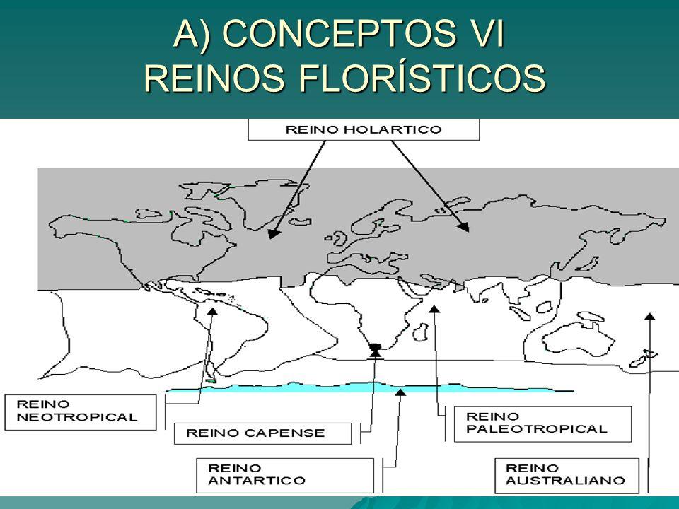 A) CONCEPTOS VII REGIONES FLORÍSTICAS LA PENÍNSULA IBÉRICA TIENE TRES REGIONES FLORÍSTICAS : BOREOALPINA.