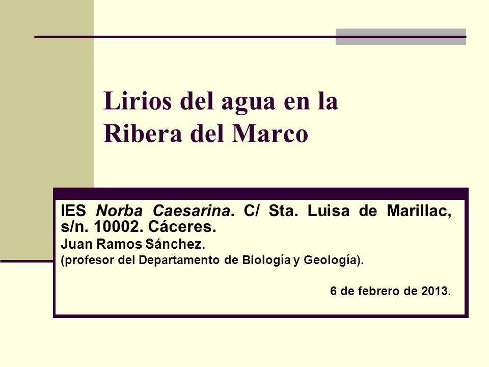 Lirios del agua en la Ribera del Marco IES Norba Caesarina. C/ Sta. Luisa de Marillac, s/n. 10002. Cáceres. Juan Ramos Sánchez. (profesor del Departam