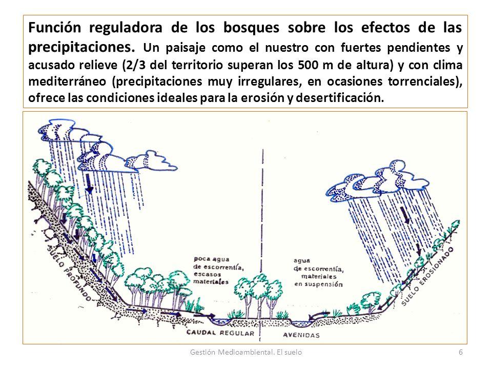 Función reguladora de los bosques sobre los efectos de las precipitaciones.