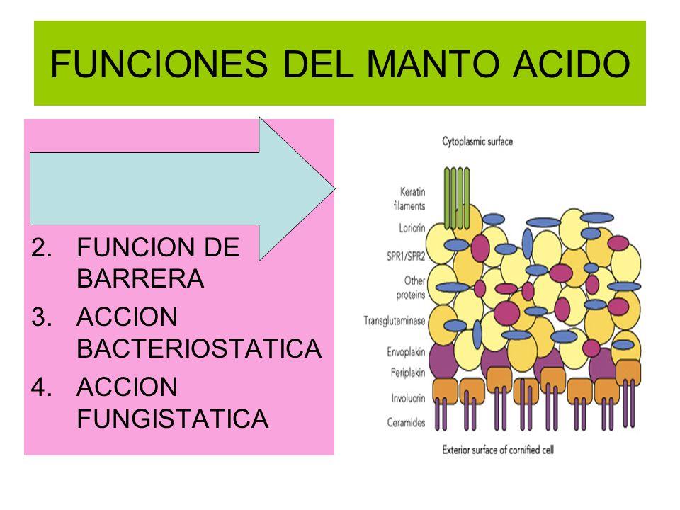 FUNCIONES DEL MANTO ACIDO 1.HIDRATACION DE LA PIEL ( FHN ) 2.FUNCION DE BARRERA 3.ACCION BACTERIOSTATICA 4.ACCION FUNGISTATICA