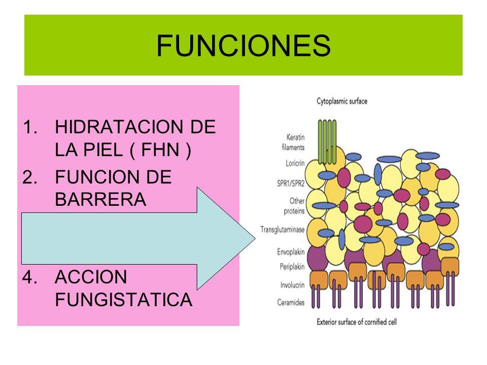 FUNCIONES 1.HIDRATACION DE LA PIEL ( FHN ) 2.FUNCION DE BARRERA 3.ACCION BACTERIOSTATICA 4.ACCION FUNGISTATICA