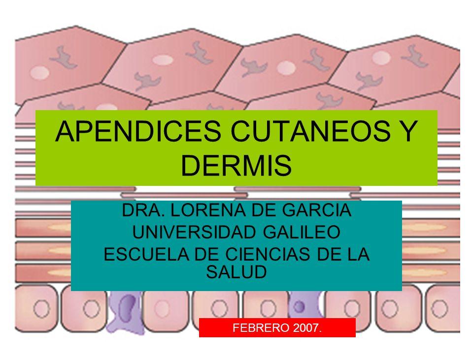 APENDICES CUTANEOS Y DERMIS DRA. LORENA DE GARCIA UNIVERSIDAD GALILEO ESCUELA DE CIENCIAS DE LA SALUD FEBRERO 2007.