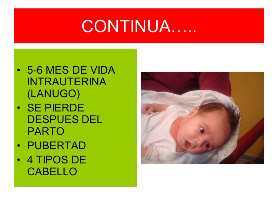 CONTINUA….. 5-6 MES DE VIDA INTRAUTERINA (LANUGO) SE PIERDE DESPUES DEL PARTO PUBERTAD 4 TIPOS DE CABELLO