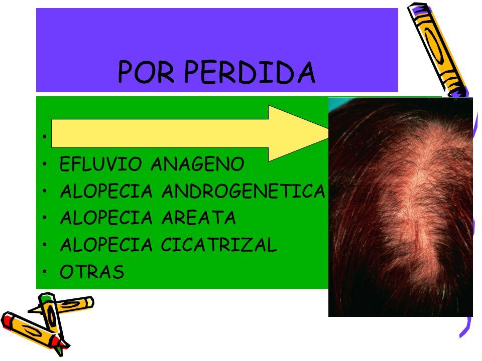 POR PERDIDA EFLUVIO TELOGENO EFLUVIO ANAGENO ALOPECIA ANDROGENETICA ALOPECIA AREATA ALOPECIA CICATRIZAL OTRAS