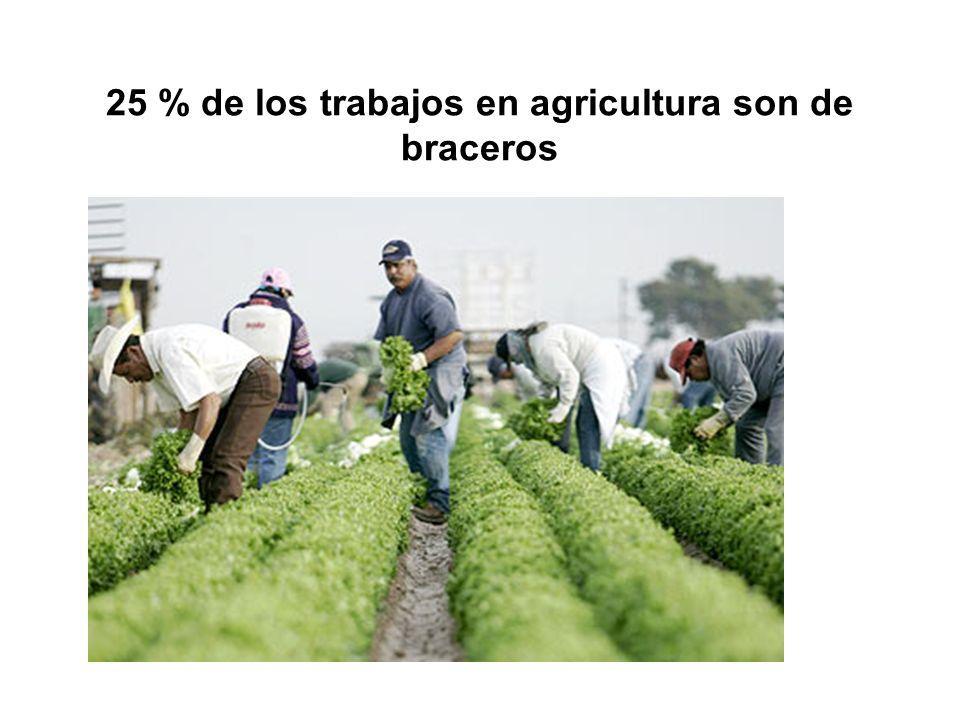25 % de los trabajos en agricultura son de braceros