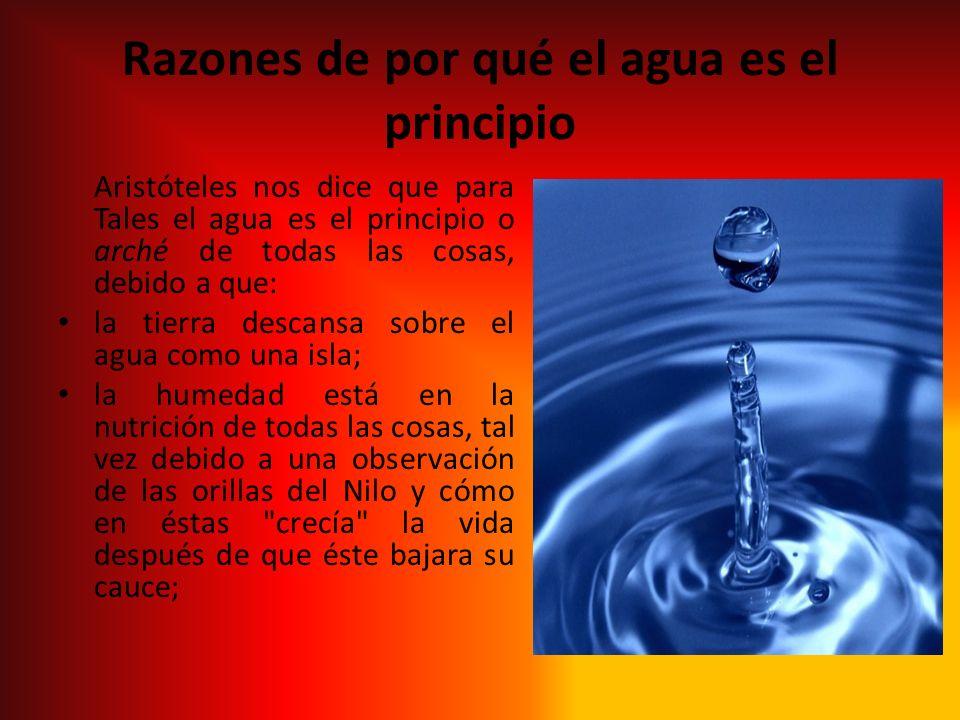 Razones de por qué el agua es el principio Aristóteles nos dice que para Tales el agua es el principio o arché de todas las cosas, debido a que: la ti