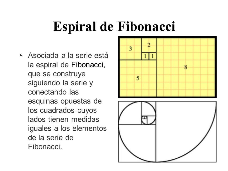 Espiral de Fibonacci Asociada a la serie está la espiral de Fibonacci, que se construye siguiendo la serie y conectando las esquinas opuestas de los cuadrados cuyos lados tienen medidas iguales a los elementos de la serie de Fibonacci.