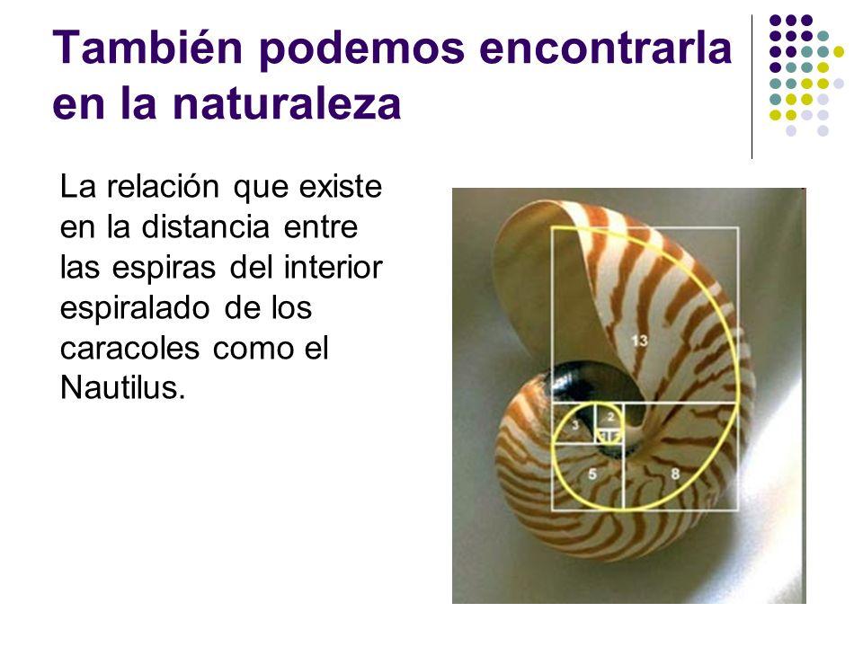 También podemos encontrarla en la naturaleza La relación que existe en la distancia entre las espiras del interior espiralado de los caracoles como el