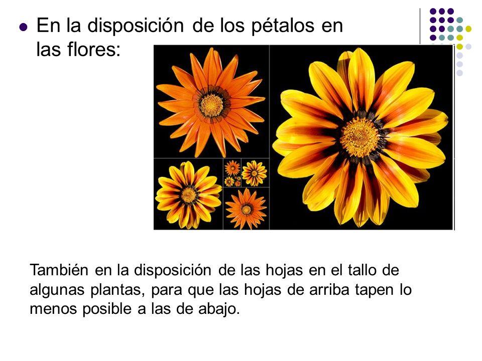 En la disposición de los pétalos en las flores: También en la disposición de las hojas en el tallo de algunas plantas, para que las hojas de arriba ta