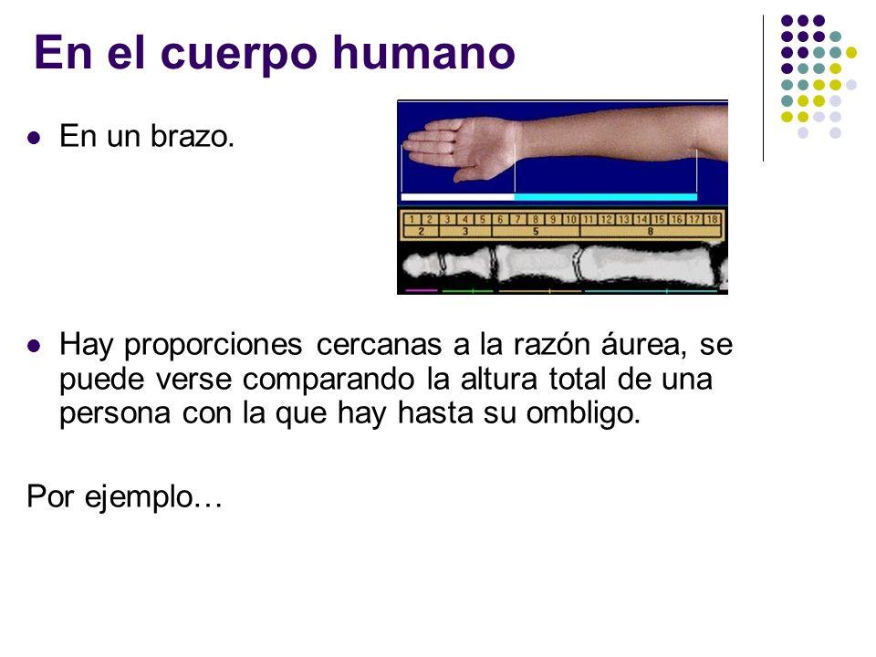 En el cuerpo humano En un brazo. Hay proporciones cercanas a la razón áurea, se puede verse comparando la altura total de una persona con la que hay h