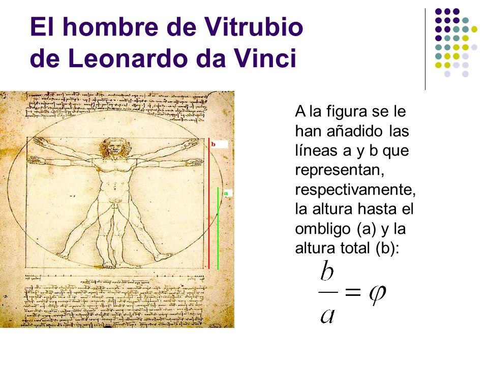 El hombre de Vitrubio de Leonardo da Vinci A la figura se le han añadido las líneas a y b que representan, respectivamente, la altura hasta el ombligo