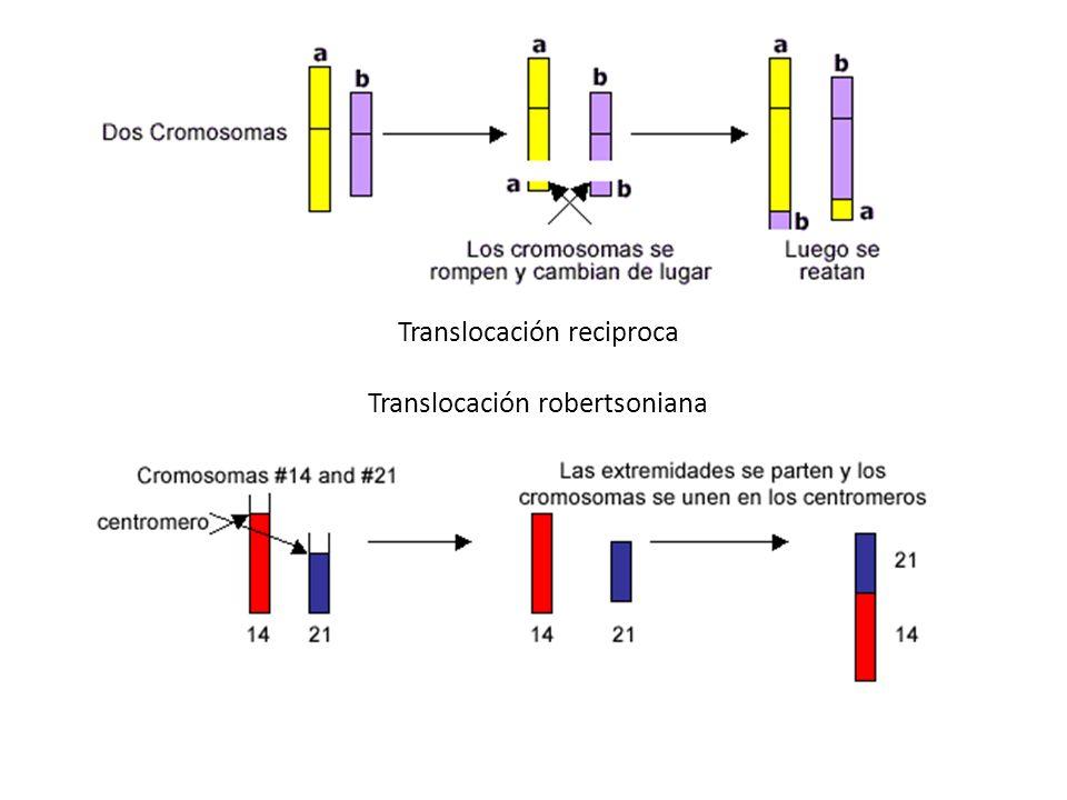 Duplicación Por una porción duplicada de un cromosoma, dentro de un cromosoma que se une con un cromosoma o como fragmento separado.