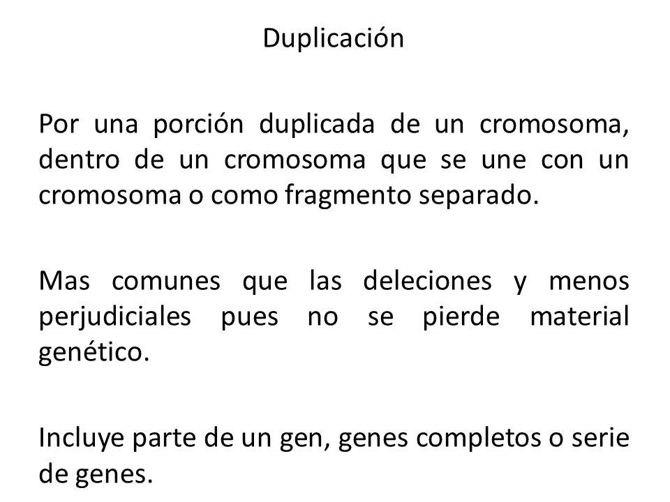 Duplicación Por una porción duplicada de un cromosoma, dentro de un cromosoma que se une con un cromosoma o como fragmento separado. Mas comunes que l