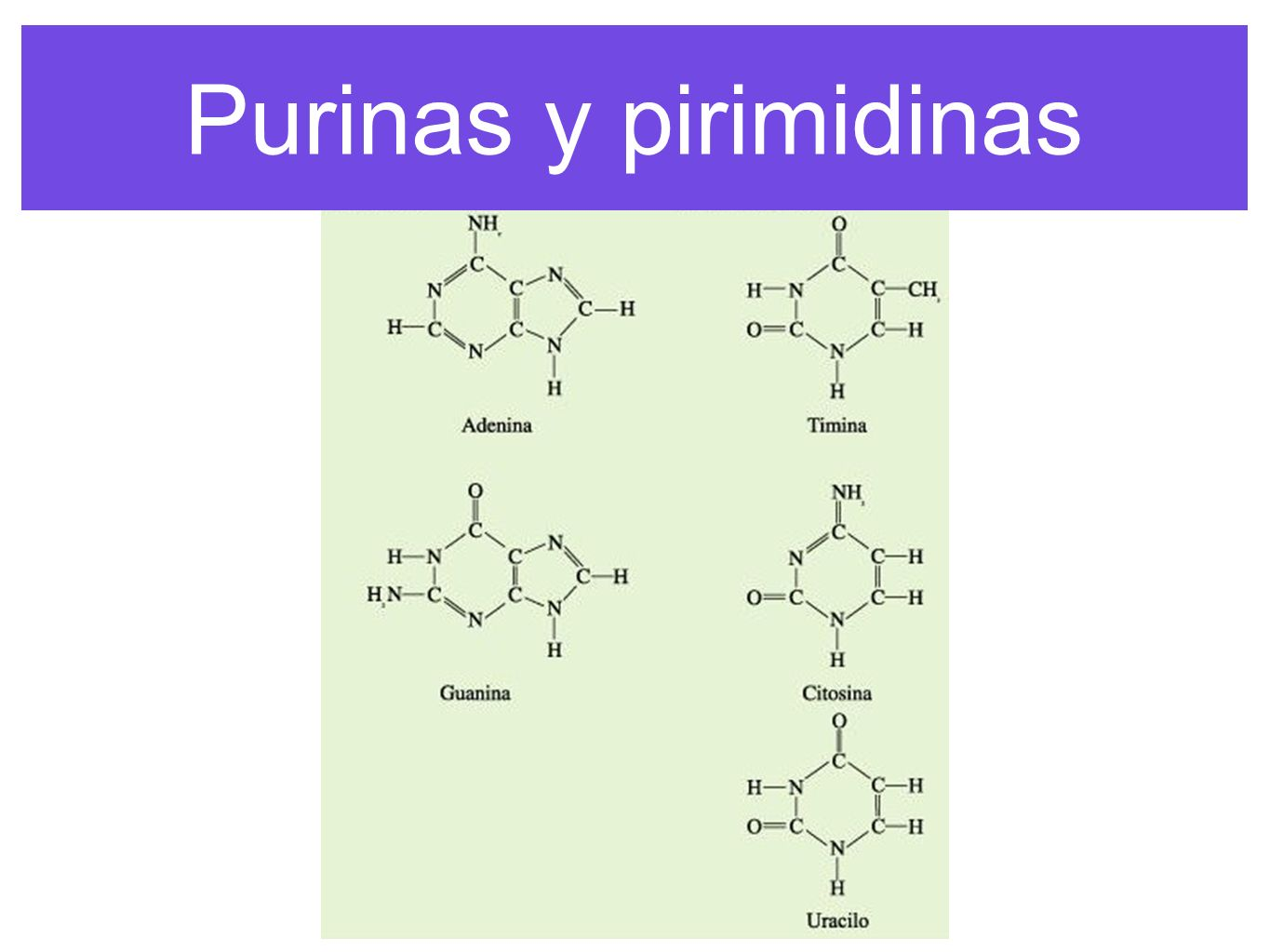 Purinas y pirimidinas