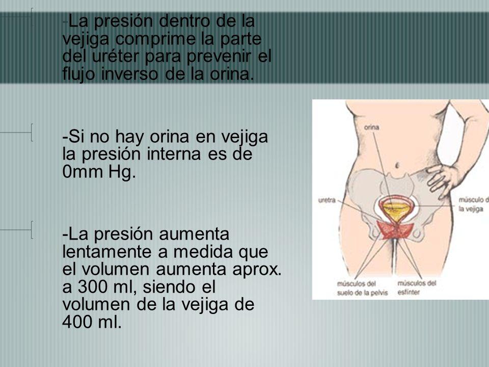 -La presión dentro de la vejiga comprime la parte del uréter para prevenir el flujo inverso de la orina. -Si no hay orina en vejiga la presión interna