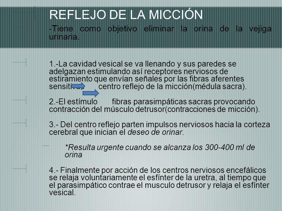 REFLEJO DE LA MICCIÓN -Tiene como objetivo eliminar la orina de la vejiga urinaria. 1.-La cavidad vesical se va llenando y sus paredes se adelgazan es