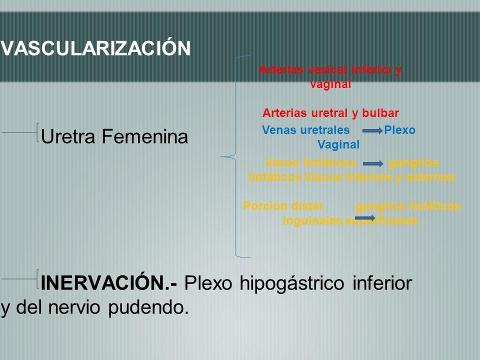 VASCULARIZACIÓN Uretra Femenina INERVACIÓN.- Plexo hipogástrico inferior y del nervio pudendo. Arterias vesical inferior y vaginal Arterias uretral y