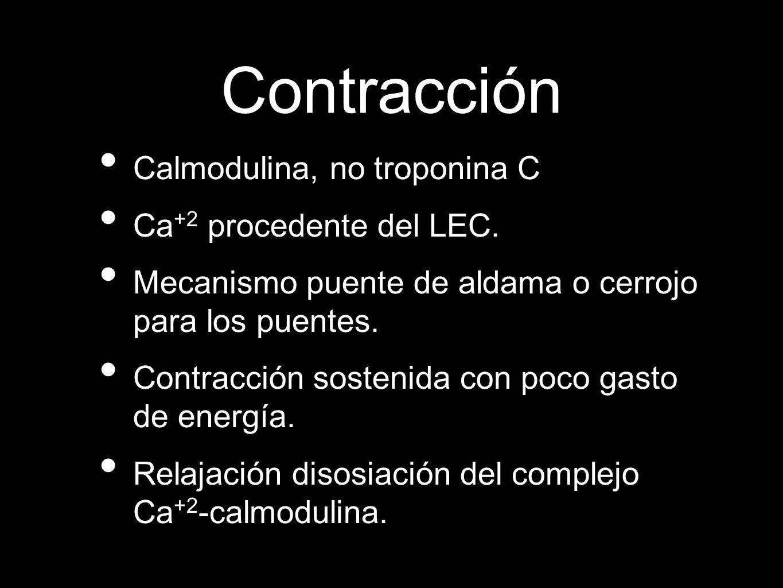Contracción Calmodulina, no troponina C Ca +2 procedente del LEC.